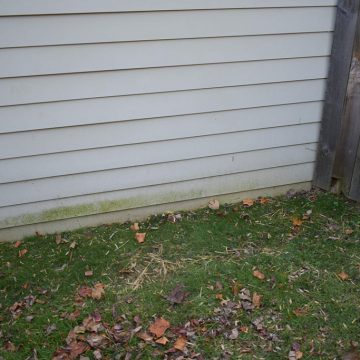 Mold was developing around the base of the home's siding.